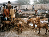 Nigeria, Leather Source